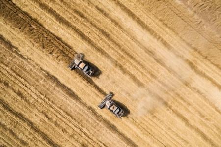 Аграрии Тюменского района приступили куборке урожая