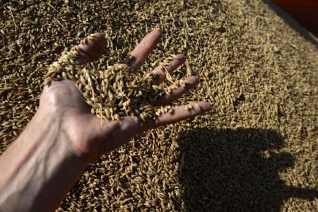 НаКрымской бирже прошли вторые торги— Зерновые интервенции
