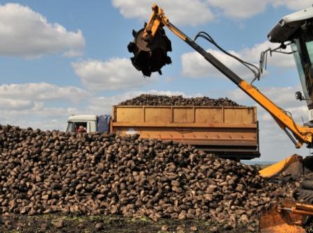 НаАлтае собрали 716 тыс. тонн сладкой свеклы