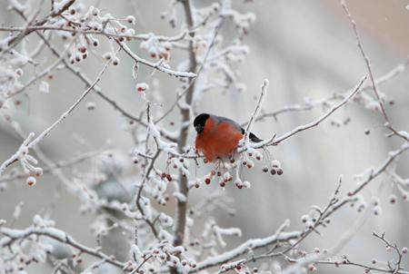 Граждан России предупредили онадвигающихся 40-градусных морозах