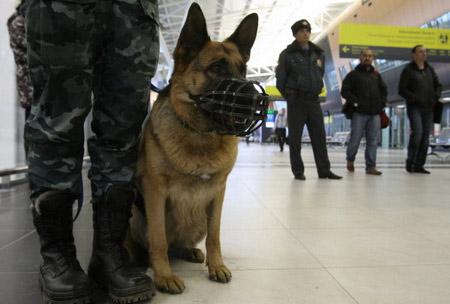 Дебоширы наборту рейса Москва— Дубай грозили подорвать самолет
