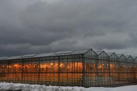 Тепличный комплекс за18млрдруб. может появиться вВоронежской области