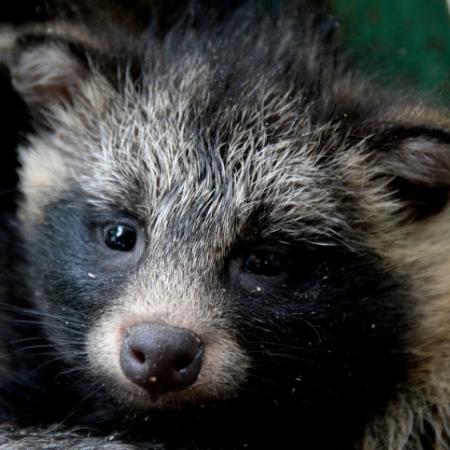 «Вымершая» собачка появилась вНовосибирском зоопарке