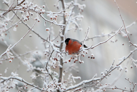 Прошедшая ночь в столице стала самой холодной сначала зимы