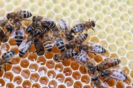 ВБашкирии зафиксирована массовая смерть пчёл