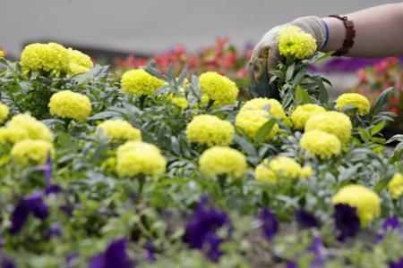 Цветы на улицах петербурга