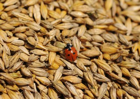 Турция ограничила импорт русской пшеницы