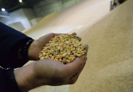 Экспорт зерна из РФ втекущем сельхозгоду превысил 35 млн тонн