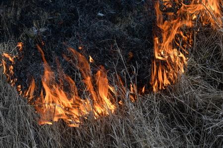 На далеком Востоке засутки огонь уничтожил 47 тыс. гектаров леса
