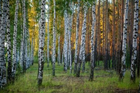 В РФ приняли законы о«лесной амнистии» иведении садоводства