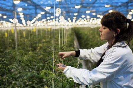 НаСтаврополье создан Северо-Кавказский федеральный научный сельскохозяйственный центр