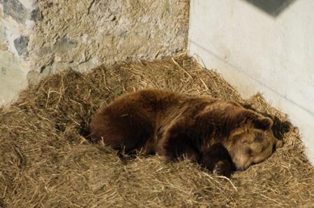 «Тихий час» для животных начался вМосковском зоопарке
