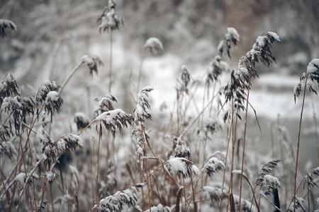 Cотрудники экстренных служб предупредили граждан Воронежской области омокром снеге, тумане игололёде