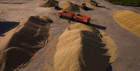 Тамбовская область вдвое увеличила экспорт зерна
