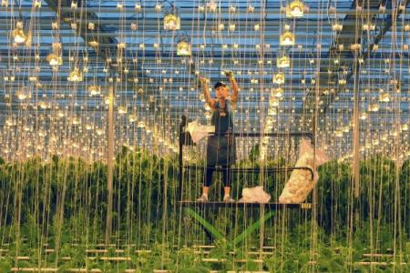 Китайцы хотят построить вКрыму тепличный комплекс— традиционно обещают негадить
