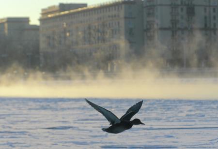 Синоптики обещают москвичам «весеннее» начало следующей недели