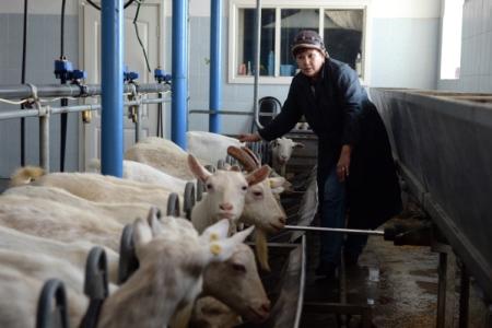Проблемные сельхозпредприятия Удмуртии присоединят к большим