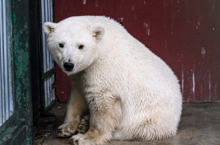 Животных Московского зоопарка всередине весны переведут влетние вольеры