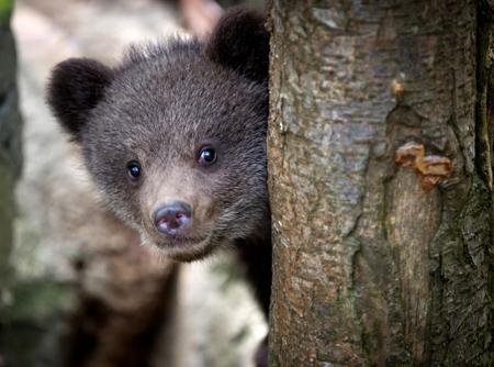 Вкрасноярском заповеднике «Столбы» медведи всё чаще выходят клюдям
