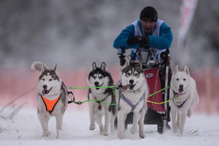 Каюры «Берингии» на Камчатке миновали 641 км за девять дней гонки