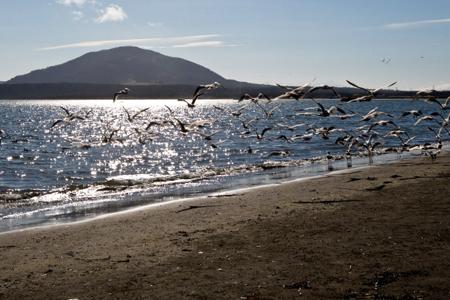 Экологи требуют установить охранный статус на камчатском острове Карагинский