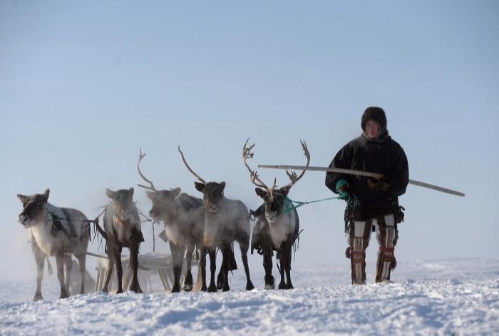 Власти Якутии направили почти 800 млн рублей на развитие оленеводства